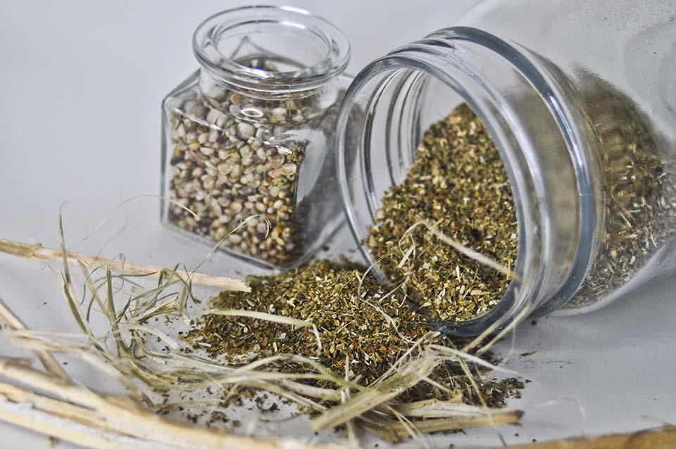 hemp seed hemp fiber