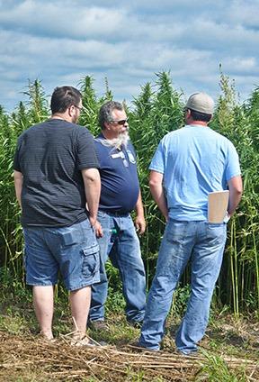 industrial hemp field tour