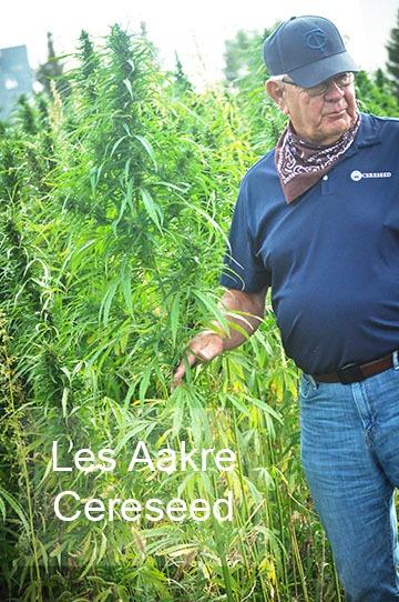 man in hemp field